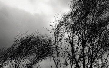 vientos