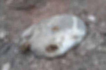 abigeato aranguren10